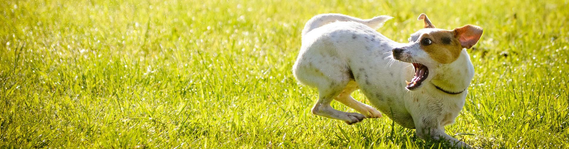 gehoorzaamheidstraining-honden